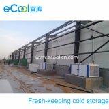 Armazenamento frio de mantimento fresco para a trasformação e o armazenamento de frutos dos vegetais