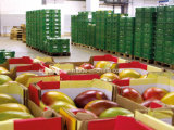 Armazém do grande tamanho e fábrica de processamento frios de mantimento frescos personalizados para frutas e verdura