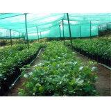 녹색 까만 플라스틱 식물성 지원 그늘 그물