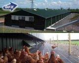 Type de sol de poulets à griller Chambre ferme avicole préfabriqués /couche Maison de poulet