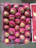 Unbagged fresco Qinguan Apple a Bangladesh