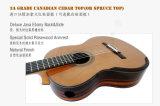 Guitare d'Aiersi Smallman avec le certificat de BV/SGS (SC110SPF)