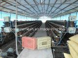 Gute Qualitätsniedriger Preis-Huhn-Rahmen von China