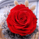 Rosas preservadas rojas de Ecuador del regalo al por mayor de la Navidad en las bóvedas de cristal