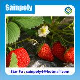 Serre chaude solaire des meilleurs prix de la Chine pour la fraise
