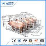 Stalle de gestation de caisse de porc en acier de galvanisation