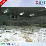 Cámara fría de edificio de la estructura del almacenaje comprensivo de los pescados