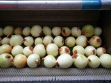 Sbucciandosi e lavare per la verdura della patata e la lavatrice della frutta