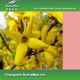 100% naturel pleurs Forsythia extrait 10 : 1, 0,5%-2,0% Phillyrin