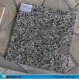 Newstar coupé à Granite Tile peau de léopard