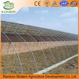 Invernaderos solares agrícolas de una sola capa Precio bueno