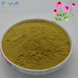 100% naturel Echinacea purpurea Extract avec un bon prix