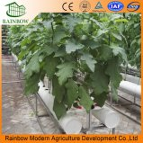 Sistema hidropónico del invernadero Growing del Multi-Palmo