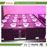 Keisueの縦の農場の安全な野菜栽培の皿