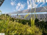 Сельское хозяйство и PV Взаимодополняющие технологии применения Cemp Mono Солнечная панель 280W