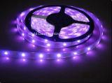 SMD 2835、SMD5050、SMD5730のSMD 3528 LEDの滑走路端燈のための紫色カラー