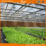 Planting Flowers를 위한 좋은 Heat Insulation Plastic Film Green House