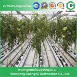 Serra efficiente per il crescente sistema idroponico di Nft per il pomodoro e la lattuga