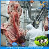Strumentazione di macello della mucca di standard europeo