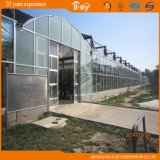 Glaswand-hohe helle Beförderung-grünes Haus