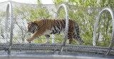 China, alambre de acero inoxidable Cuerda Zoológico Red