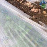 Tessuto non tessuto del coperchio di verdure con il trattamento UV