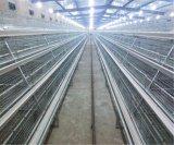 Sistema velho do equipamento das gaiolas de pássaro da galinha do dia novo da exploração avícola (um tipo frame)