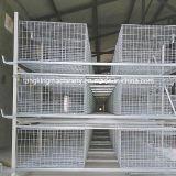 Ensemble complet de poulets à griller de la cage avec de faibles prix du système