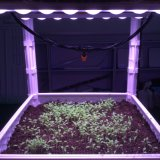 LED Grow Light Bar avec des coupes de réflecteur