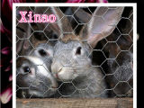 ウサギの塀または金網のための農場の塀