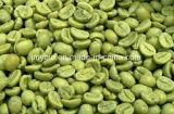 Acido clorogenico dell'estratto del chicco di caffè di verde di perdita di peso