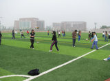 Monofilamento de alta calidad Artificial Hierba Jardín de Campo de fútbol
