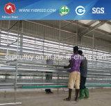 Jaula del pollo de Kenia del surtidor de la batería para la venta
