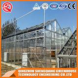2017 de Serre van het Blad van het Polycarbonaat van het Frame van het Staal van China