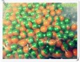 De in het groot Ballen van de Verf van Ballen Paintball Kogels/Paintball met de Norm van ISO