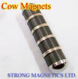 Magnetos de vaca