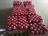Surtidor de oro FUJI rojo fresco chino Apple/Qinguan Apple