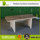 Conjunto polivinílico determinado de la silla de vector de cena de la rota del jardín al aire libre de los muebles