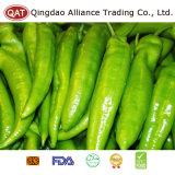 Hochwertiges gefrorenes grünes Paprika-Püree