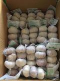 aglio bianco normale del sacchetto della maglia 10kg