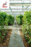 Venlo Glasgewächshaus für das Agrarerzeugnis-Wachsen