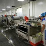 Verdure di marinatura che tagliano e che puliscono macchina elaborante di lavaggio