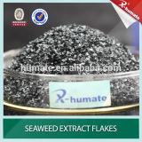 L'extraction de 100 % seaweed Ascophyllum nodosum