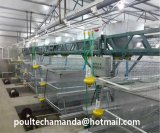 Automation Pullet Farm Cages Equipment (A Type Frame)