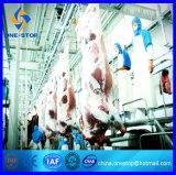 Halalの屠殺場機械食肉処理場の牛虐殺ライン
