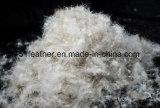 Oie grise/grise lavée responsable en bas de 95% (IDFL, EN12934, USA-2000, JIS, GB/T17685-2016)