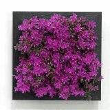 Plantes et fleurs artificielles des usines Gu-Jy23212546 de Succulent