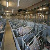 Клети свиньи верхнего продавеца гальванизированные оборудованием порося