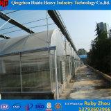 Aluminiumrahmen-Tunnel-Glasgewächshaus-einzelne Überspannung mit automatischer Ventilation