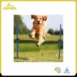 De Staaf van de Hindernis van de Sprong van de Opleiding van de Oefening van de Behendigheid van huisdieren